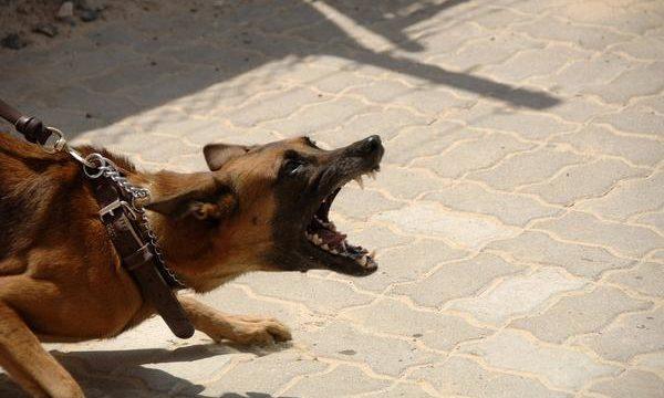 Qué hacer cuando un perro tiene problemas de comportamiento