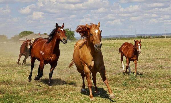 Cuidados de los cascos del caballo de granja
