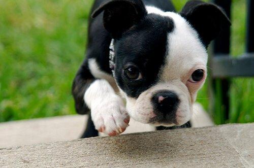 Cómo propiciar la socialización del cachorro