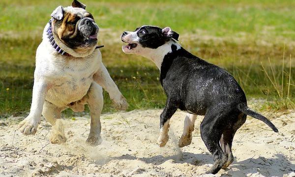 Cómo se deben manejar y controlar las mascotas
