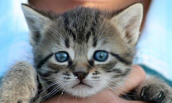 Los cuidados más importantes para los gatitos en casa