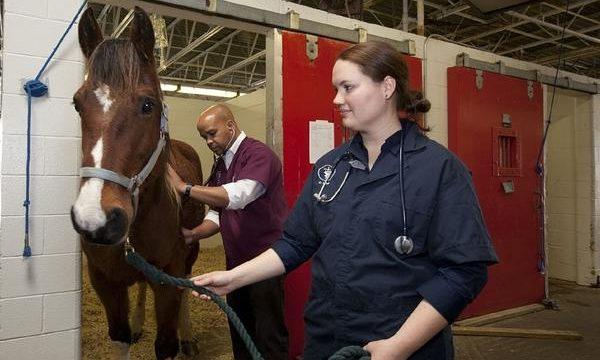 Importancia del veterinario para la salud de los animales de granja