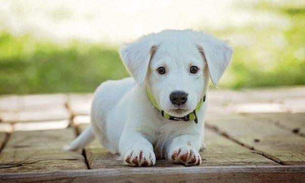 Cuidados más importantes que se le deben dar a un perro mascota