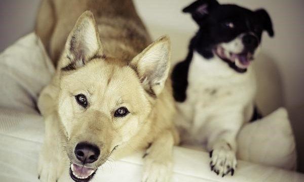 Cómo se deben cuidar a las mascotas