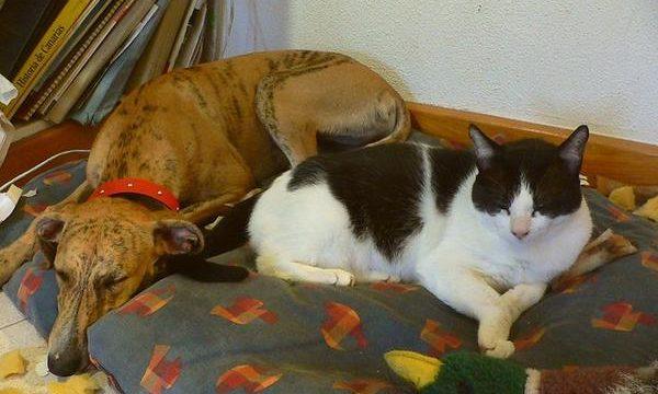 Consejos y recomendaciones para cuidar a perros y gatos