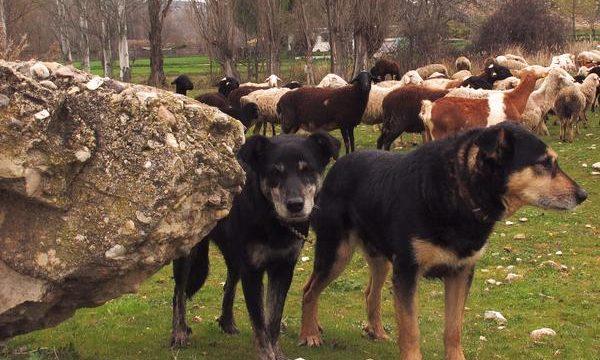 Discutiendo la eutanasia en las mascotas