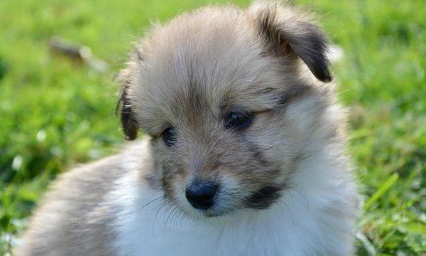 Claves de adiestramiento canino para los perros mascota
