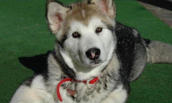 Consejos para el cuidado de tu perro que no debes dejar pasar