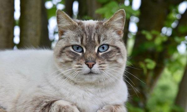 Animales de compañía, consejos y recomendaciones para su correcto cuidado