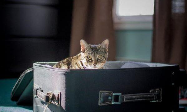 Cómo puedo viajar con mi gato para ir de vacaciones