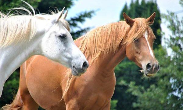 Aprende a cuidar correctamente a los caballos de tu granja