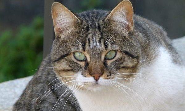 Cómo cuidar a los gatos ancianos en casa y ofrecerles una buena calidad de vida