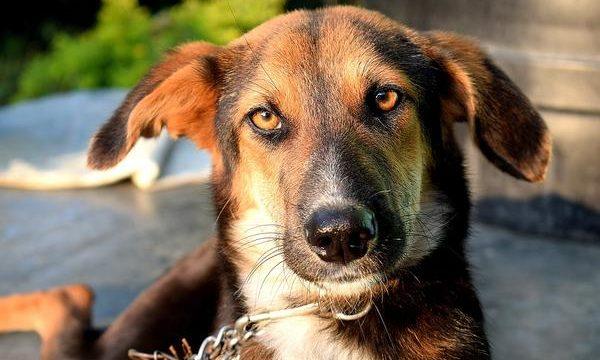 Quiero ser un propietario de mascotas responsable