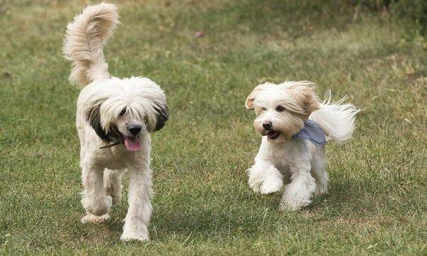 Criaderos de perros, pros y contras