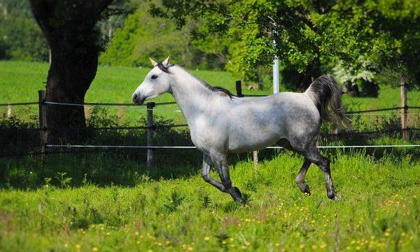 La digestión del caballo de granja, consejos y recomendaciones