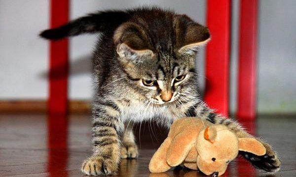 Consejos para ahorrar en el cuidado de las mascotas