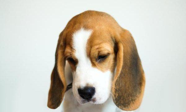 Qué daños les provoca a las mascotas la pirotecnia