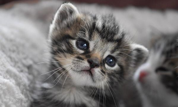 Cuidados y atenciones que requiere un gato huérfano