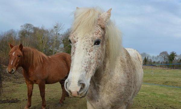 Atenciones y cuidados básicos para el caballo de granja