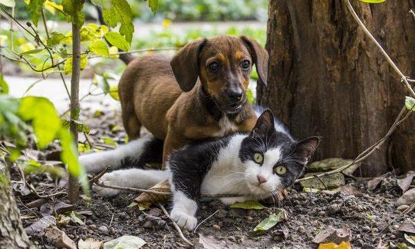 Atenciones básicas para las mascotas