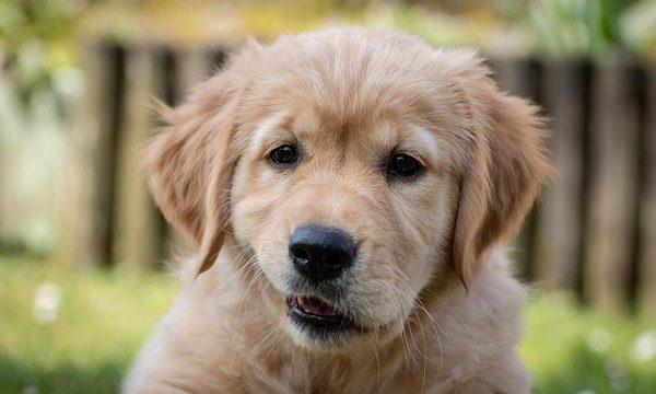 Diferentes tipos de lesiones que pueden sufrir las patas del perro
