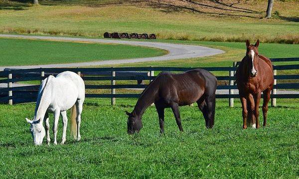 Dolor y analgésicos para los caballos de granja