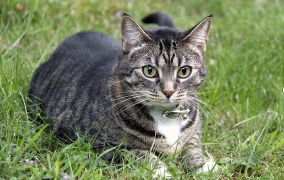 Importancia de pesar a nuestro gato con regularidad