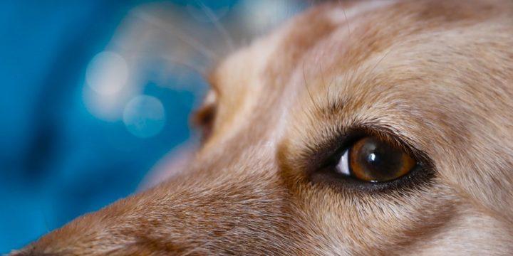 Cómo se puede detectar el sobrepeso en las mascotas