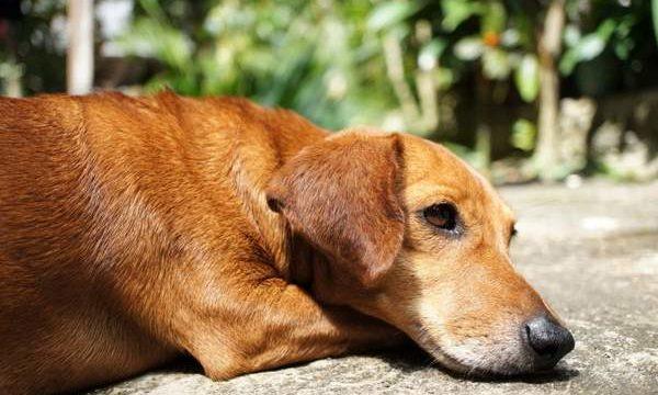 Diarrea con mucosidad en el perro, ¿qué hacer?