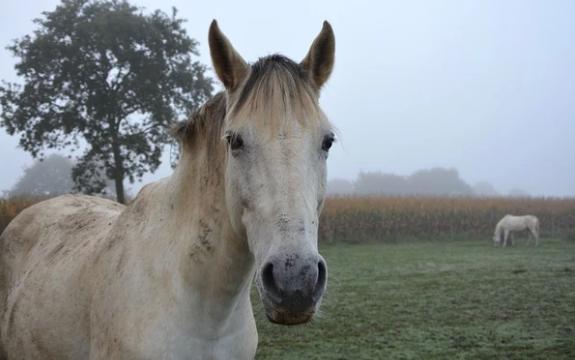 El problema de la sarna en los caballos