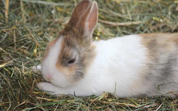 La agresividad entre conejos, cómo resolverla