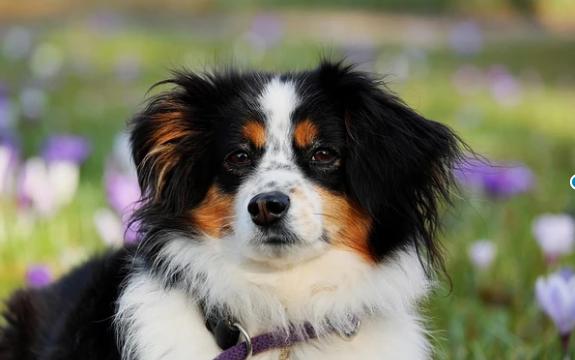 El problema del colesterol alto en el perro