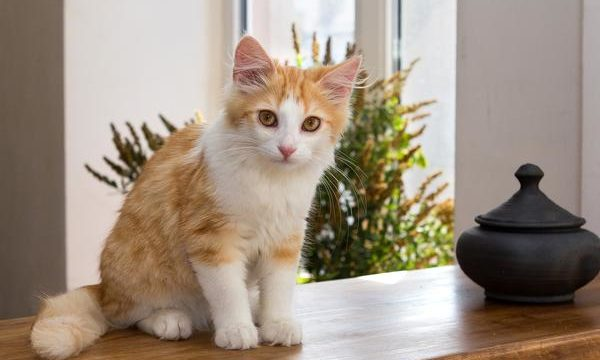 Principales síntomas de la enfermedad renal en los gatos
