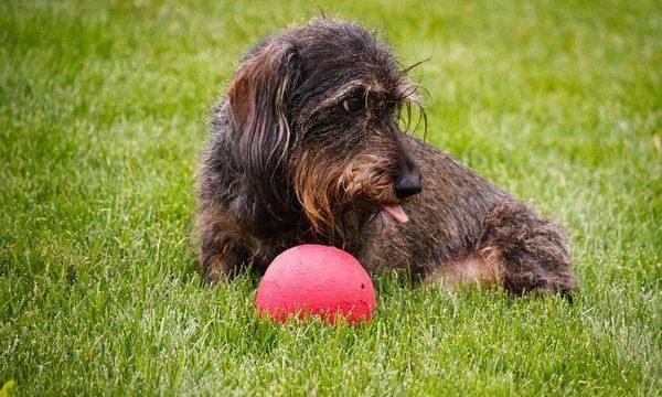 El problema de la obesidad en los perros