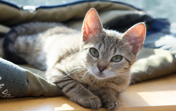 Antibióticos para gatos, sí o no