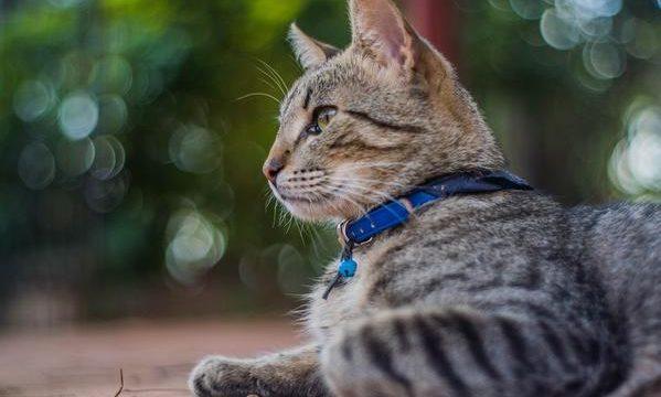El problema del crecimiento insuficiente en los gatos