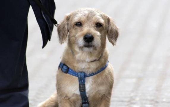 El problema del rotavirus en los perros