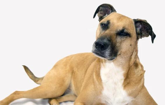 Coronavirus: Consejos de precaución sanitaria para sacar de paseo al perro