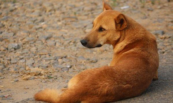 El problema del Ictus en los perros