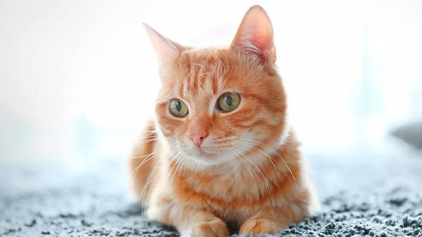 El adiestramiento del gato