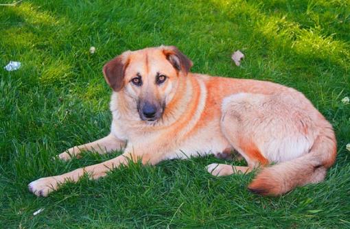 La hipoalergenia en los perros