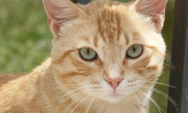 Los gatos y la ansiedad, cómo afrontar este problema de las mascotas