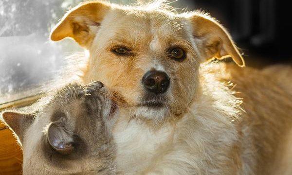 La deshidratación en las mascotas