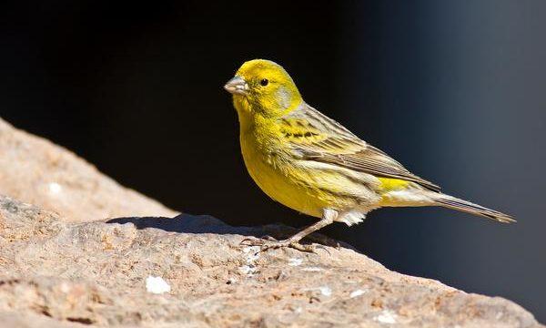 Como acondicionar el ambiente de los canarios