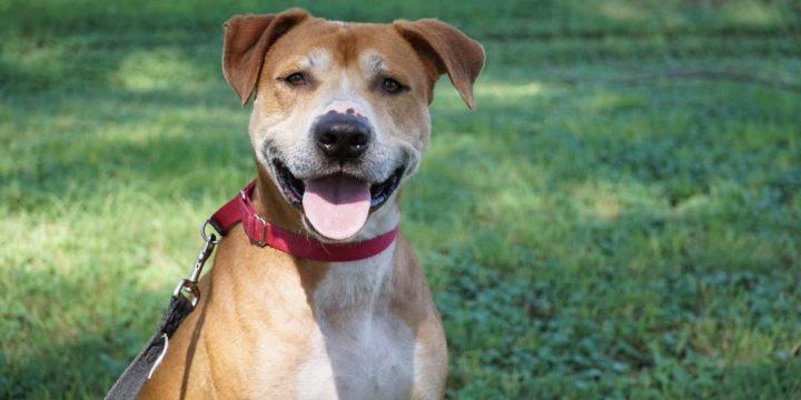 Consejos para quienes adoptan un perro por vez primera