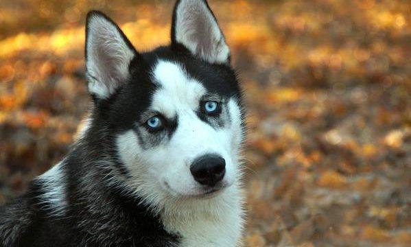 El problema del empacho en las mascotas