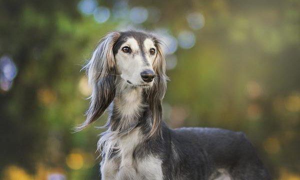 La eutanasia en los perros, qué es y cuándo se debe aplicar