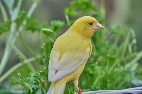 Cuidado de los pájaros: ¿Es conveniente dejarlos volar fuera de su jaula?