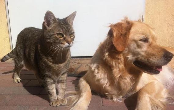 Tener una mascota, una cuestión de responsabilidad
