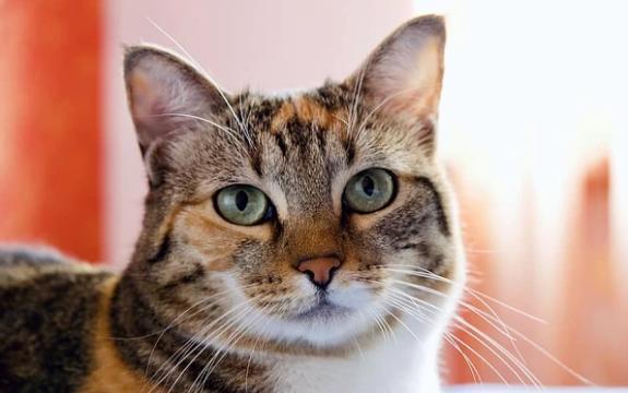 El temor de los gatos al agua ¿Por qué y cómo afrontarlo?